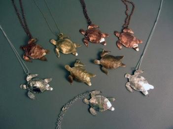 Beth Wicker's Turtles